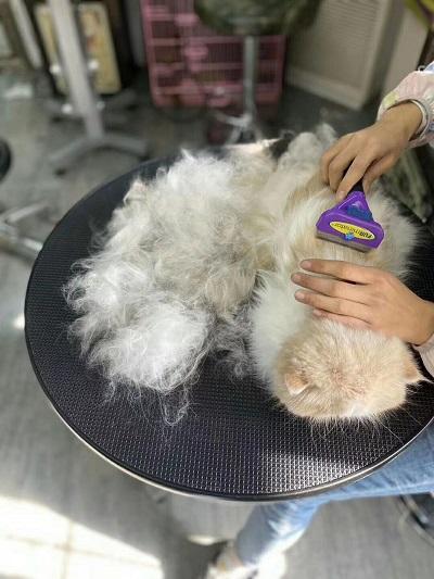 猫猫 长毛祛毛梳